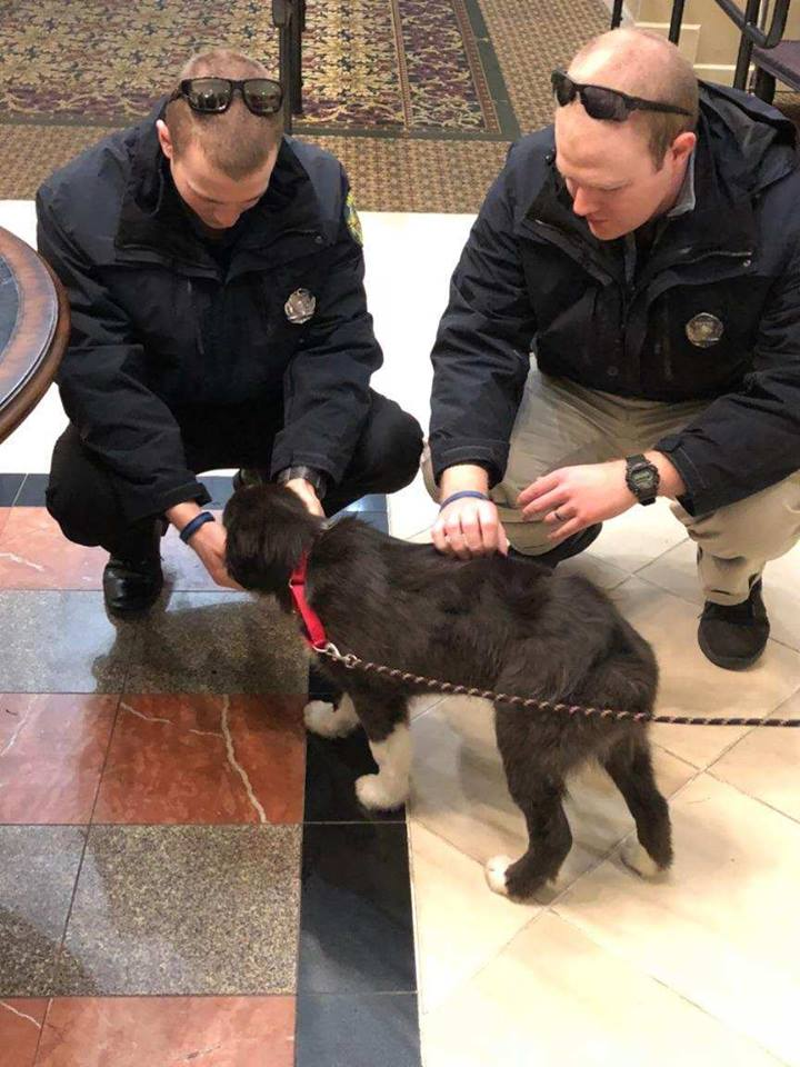 Officers Jordan Perry and Danny Place of the Bangor Police Department greet the 14-week-old border collie named Tessa.