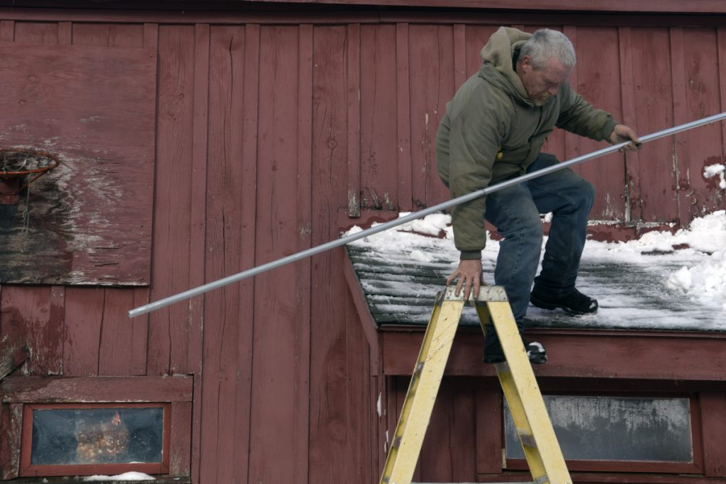 A hen watches farmhand Wayne McAfee descend a barn roof Tuesday after cleaning snow off it at Sonny Black's farm in Litchfield. Black said he gets 20 eggs a day from a flock of 28 chickens.