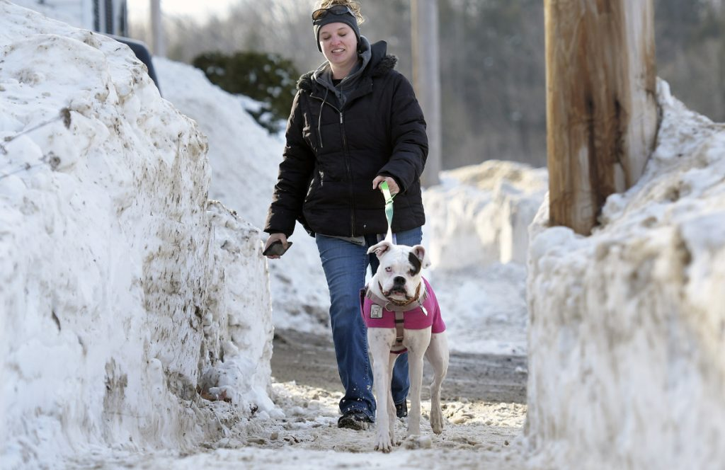 Professional dog walker Jessica Greenleaf accompanies Stella on Wednesday on her daily constitutional through the snow berms of Gardiner.