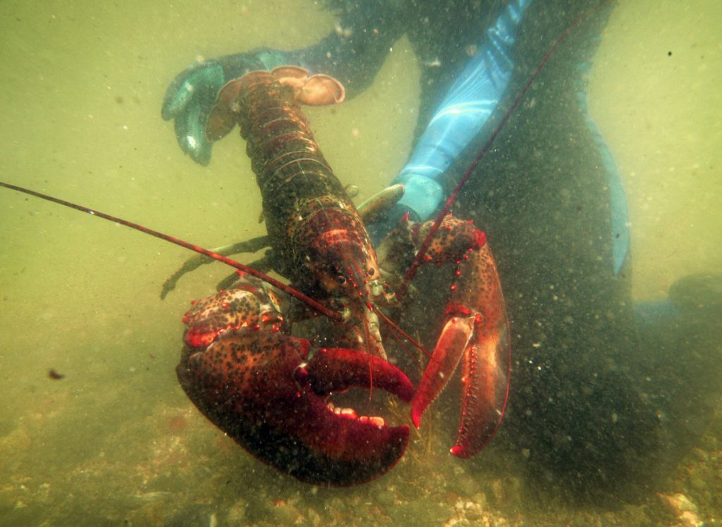 The Maine Lobster Marketing Collaborative is funded by fees paid by members of the state's industry.