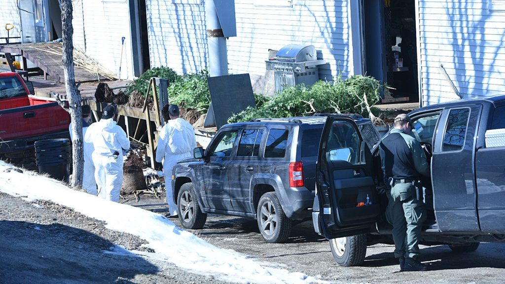 Law enforcement agents take marijuana plants out of a building on Lincoln Street in Lewiston on Feb. 27.