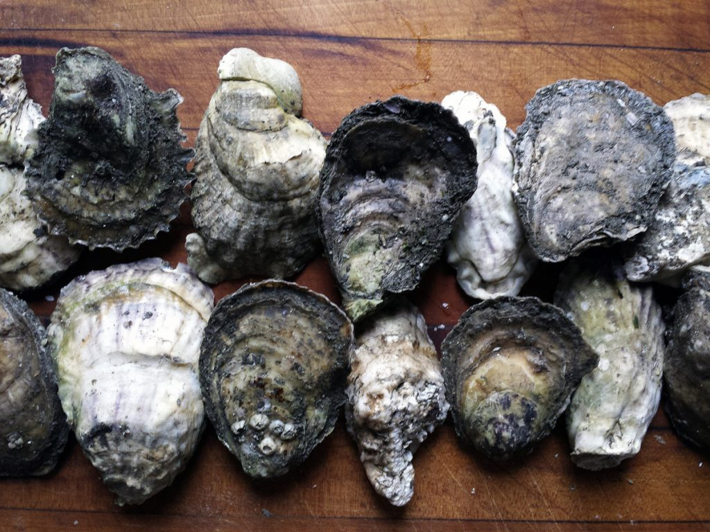Wonky, unlovely oysters that could in no way be described as uniformly shaped? Bring 'em on.