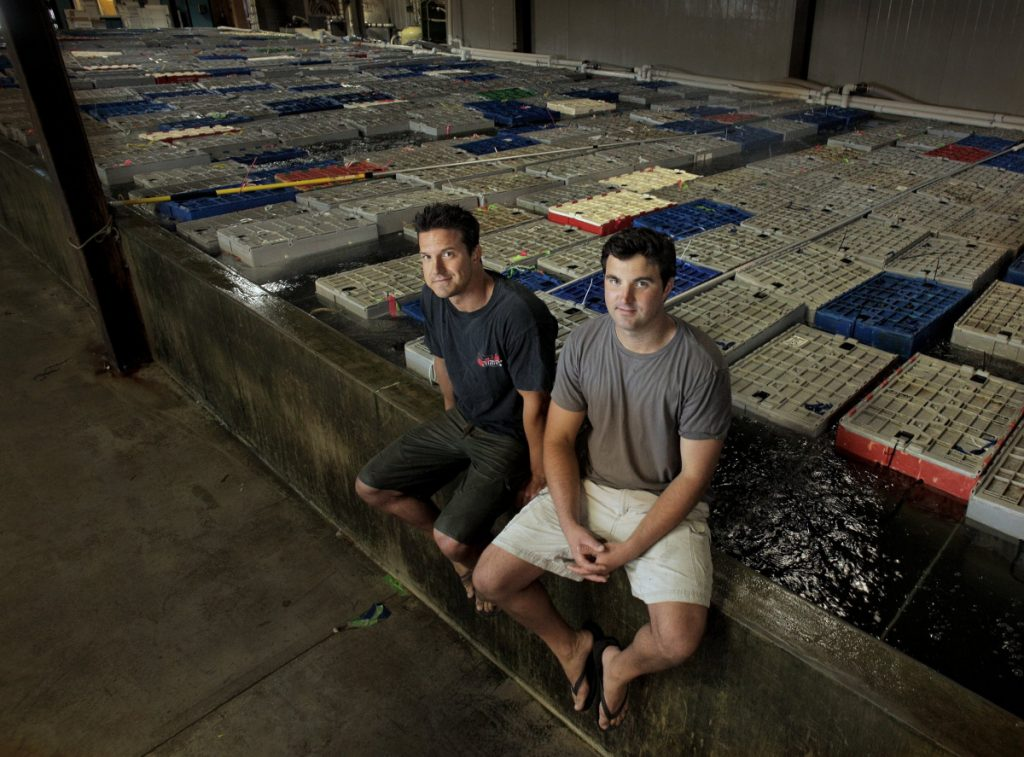 Brothers Brendan Ready, left, and John Ready, co-owners of Ready Seafood on Portland's waterfront, sit on the edge of their holding tank filled with 120,000 pounds of live lobster.