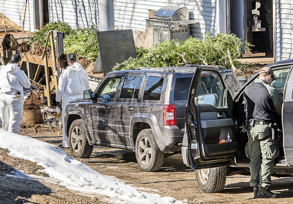 Law enforcement agents remove marijuana plants from a building Tuesday morning on Lincoln Street in Lewiston.