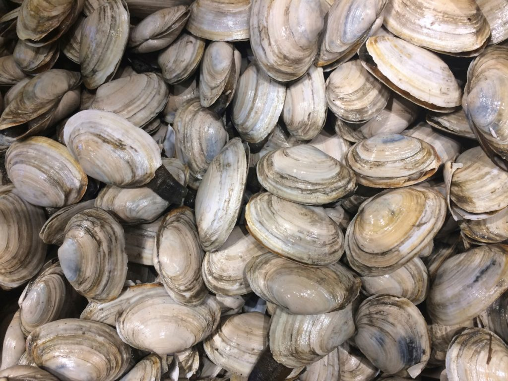 Maine's clam harvest continues to decline, as the value of Maine's clams dipped by nearly $4 million last year.