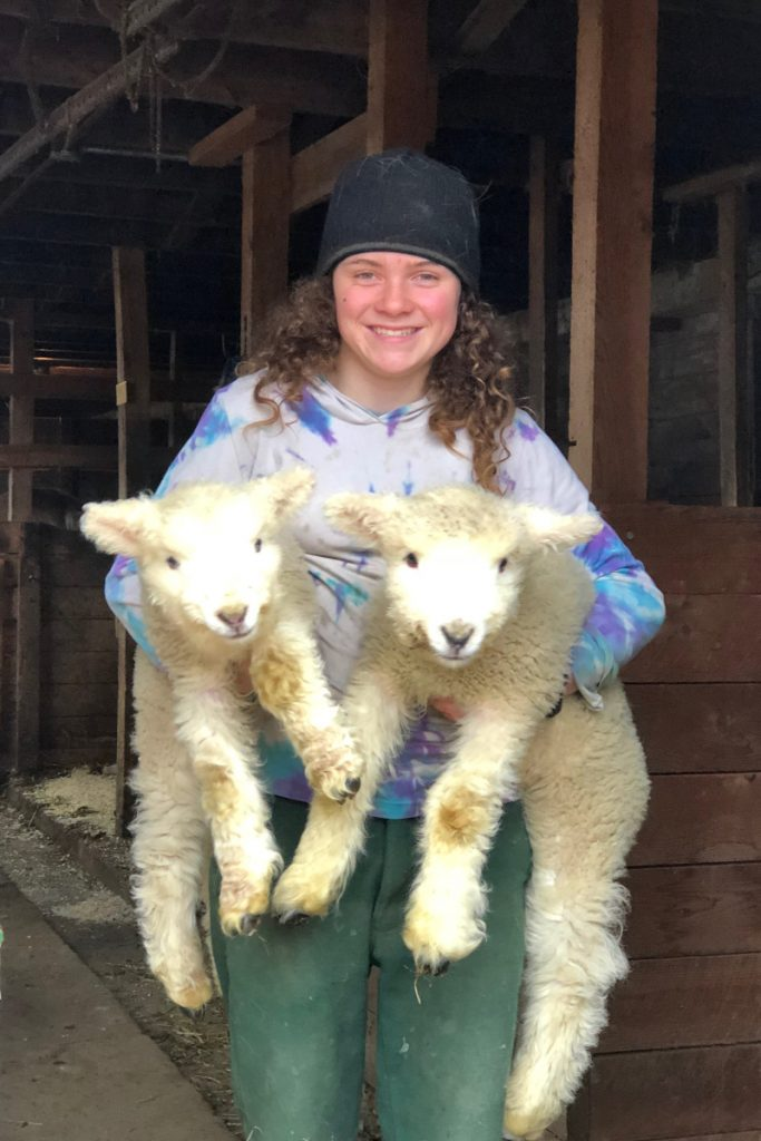Sage Whithead, 12, shows off twin lambs born a few weeks ago at Winterberry Farm in Belgrade. Visitors can meet the lambs and numerous other farm animals at the spring celebration, which will include sheep shearing, spinning, and May pole dancing, on April 29.