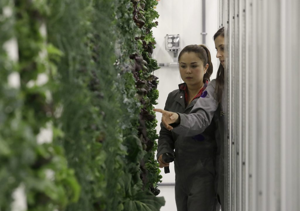 Production manager Emy Kelty, left, and senior grower Molly Kreykes scan and monitor plants growing on towers in the grow room at the Plenty, Inc. office.