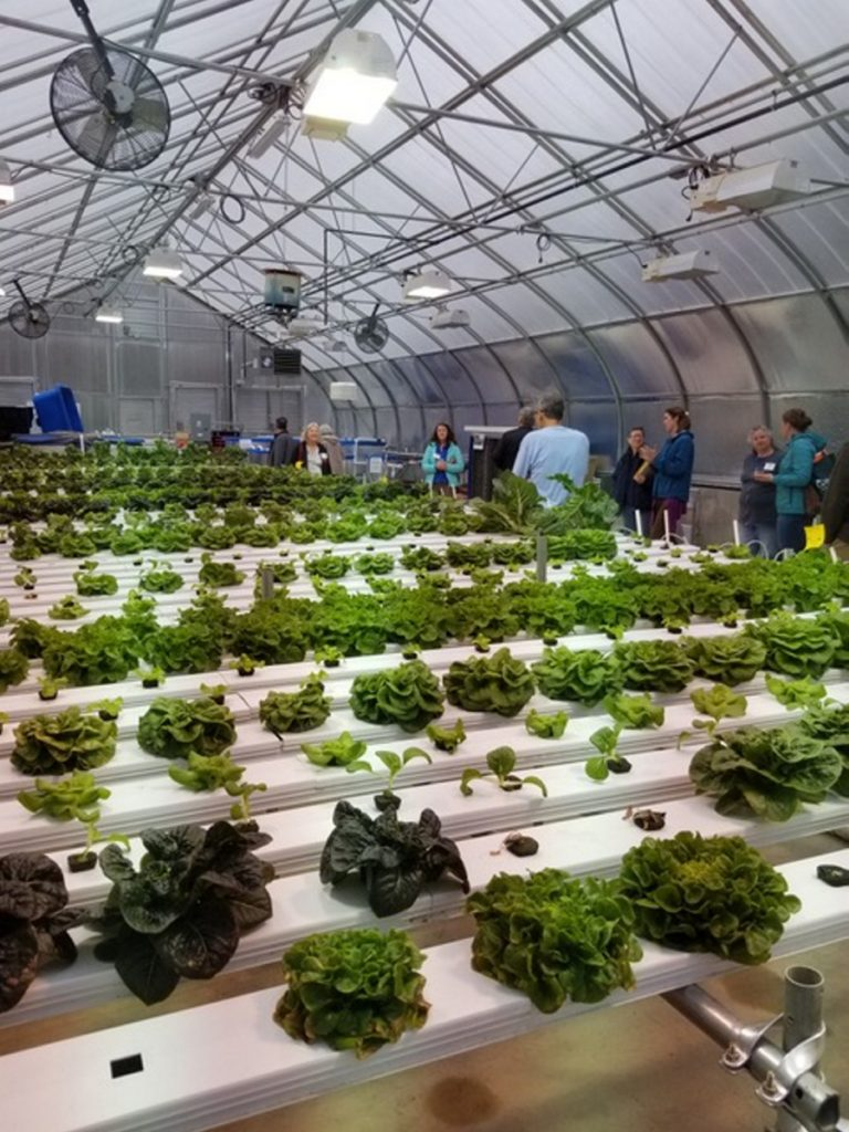 MeANS currently operates two greenhouses on the Good-Will Hinckley campus — one focused on aquaponics year round, and one a seasonal in-ground greenhouse.
