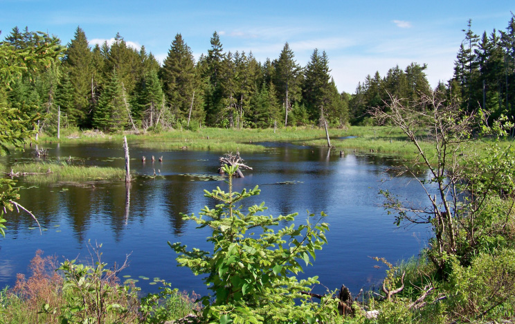 The forests and wetlands of Moosehorn National Wildlife Refuge in Washington County provide habitat for over 225 species of birds, endangered species, resident wildlife, and rare plants.