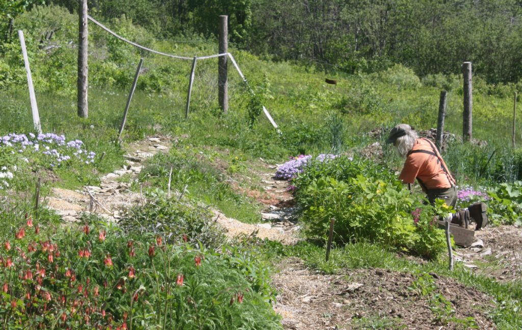 At Rebel Hill Farm in Liberty, Peter Beckford harvests year-old Vernonia to sell.