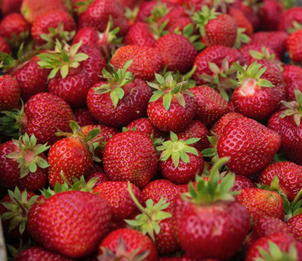 There are nearly 20 farms in Cape Elizabeth, including three that grow strawberries.