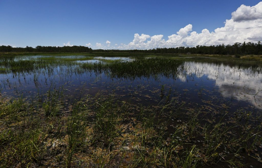 An emergent marsh reflects the sky at the Panther Island Mitigation Bank this week near Naples, Fla., one of the success stories behind the federal government's preferred method of protecting U.S. wetlands from damage from development.