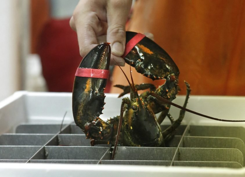China's proposed tariff on lobster from U.S. has Maine's industry on edge - CentralMaine.com