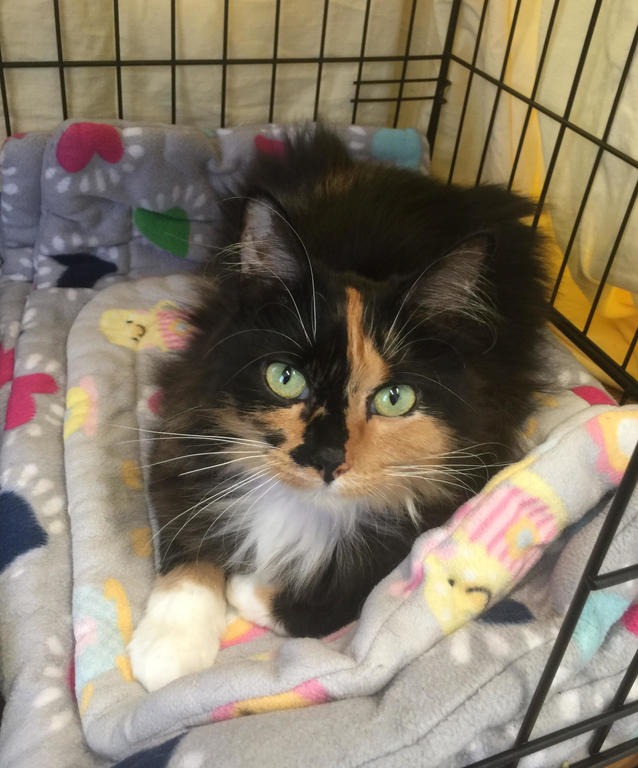 Lucy the stowaway cat should be headed home to South Carolina by the end of the week where her owners are anxiously waiting to be reunited.