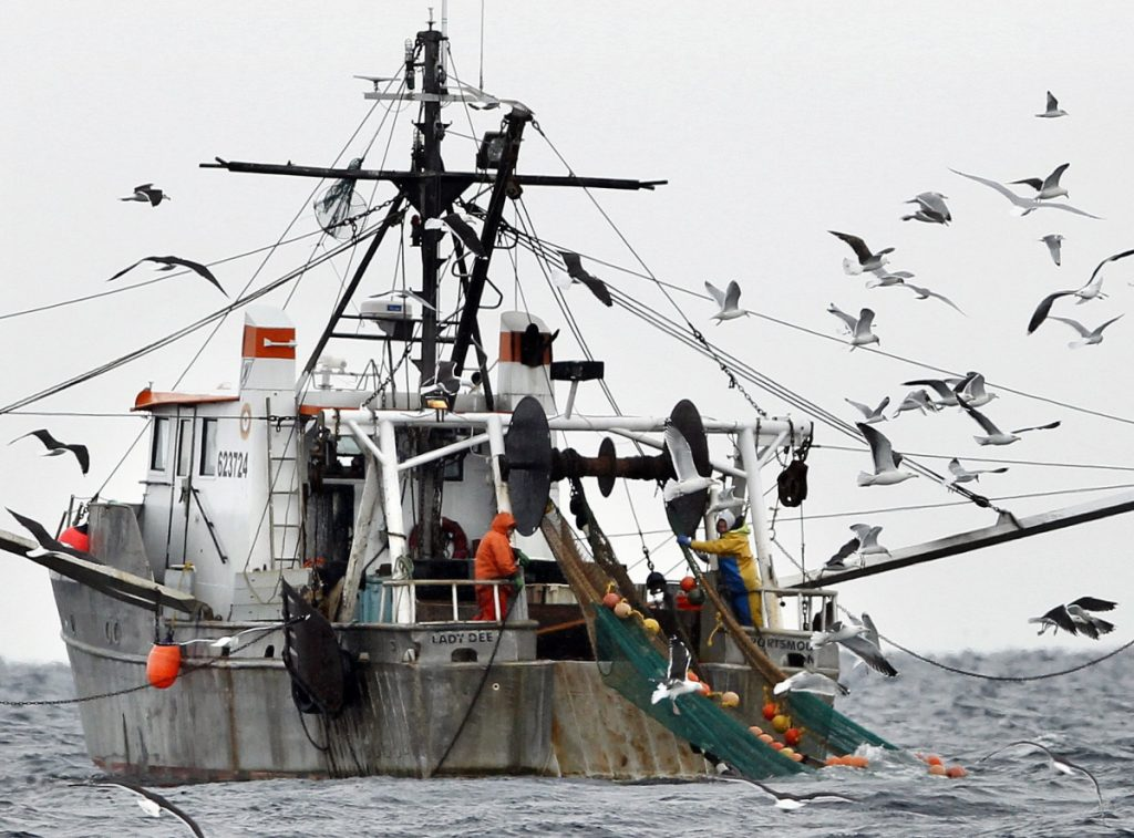 Gulls swarm a shrimping vessel in the Gulf of Maine in 2012. Warming ocean temperatures are inhospitable to the fishery, scientists say.