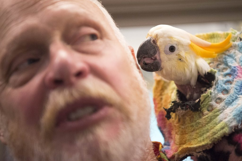 Visitors flock to Harmony parrot sanctuary - CentralMaine com