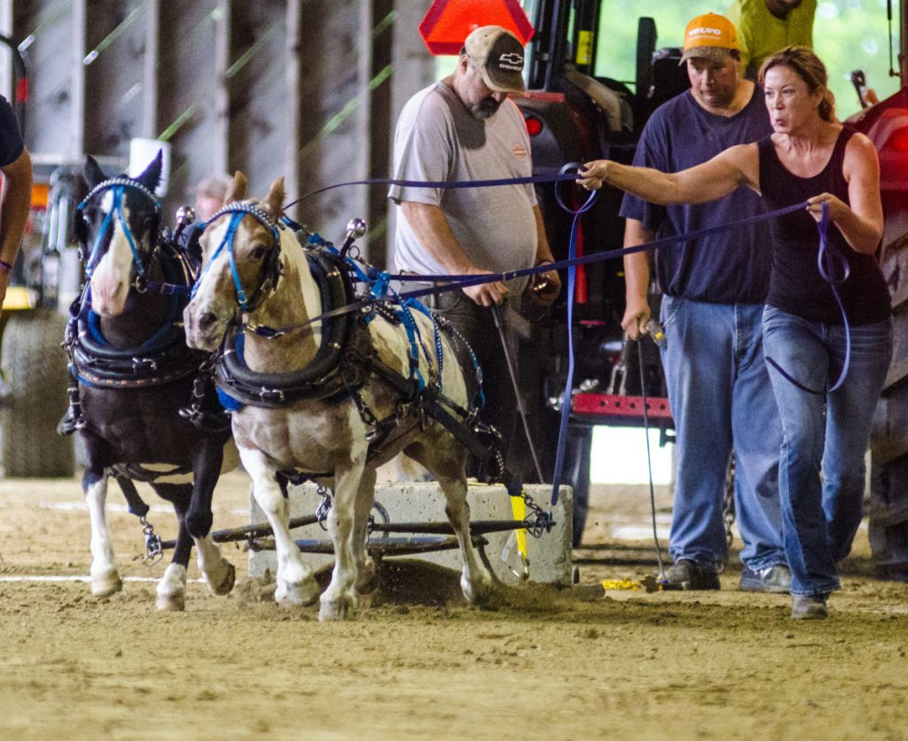 "Taryn Hunt, of Glover, Vermont, and her team, Roxie and Scat, compete in miniature-horse pulling Saturday in the Charles Henry Robinson Memorial Pulling Ring at the Monmouth Fairgrounds. This is the 108th annual Monmouth Fair, which advertises itself as ""a little fair with a lotta pull."""
