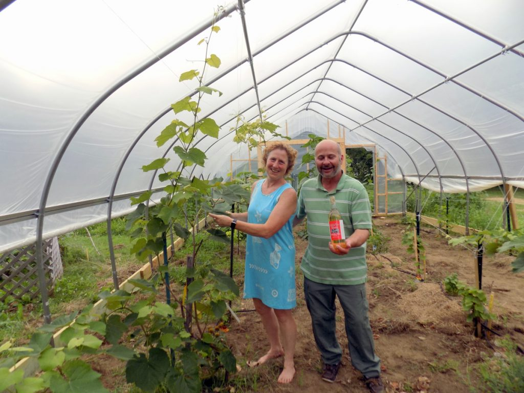 Patty and John Cormier stand in their new hoop house at Kennebec Home Brew Supplies on Farmington Falls Road in Farmington. The structure may be the first in Maine to grow grapes for wine production.