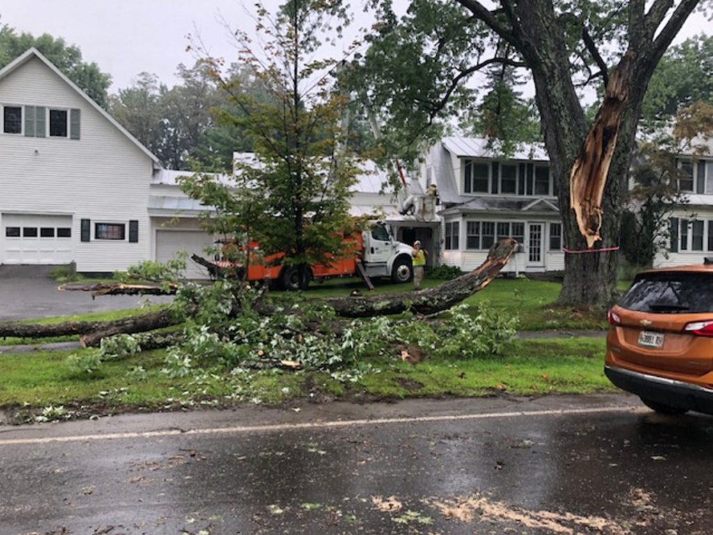 A large section of a maple tree fell into the road Tuesday afternoon on Jewett Street, dislodging power lines and contributing to traffic woes in Skowhegan.