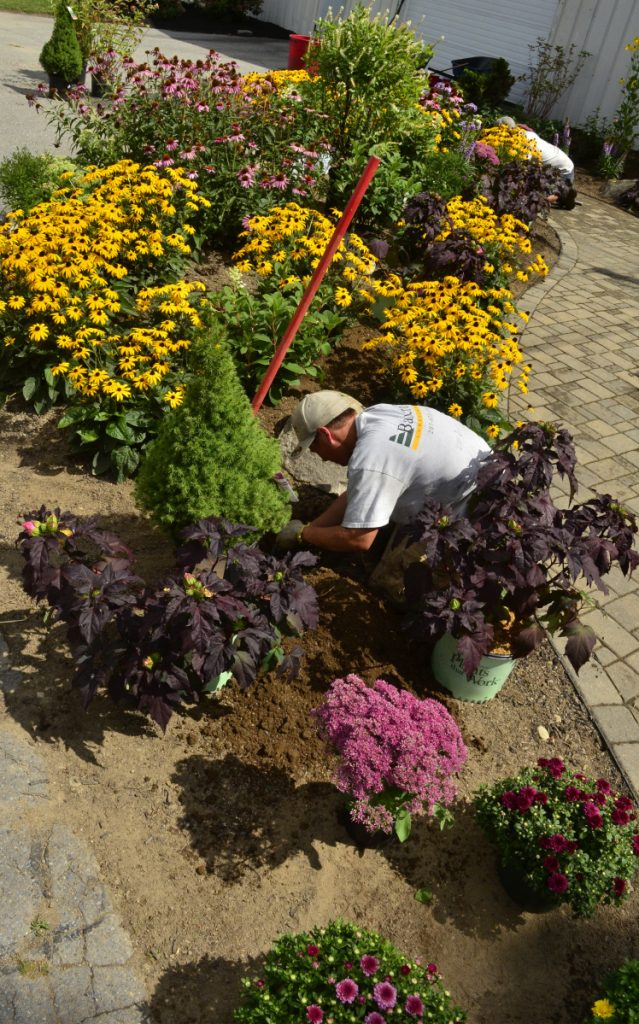 Bancroft Landscaping employee Kelly Allen plants a shrub Tuesday at the Windsor Fairgrounds in Windsor.