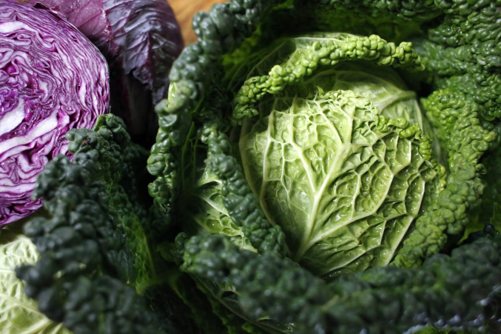 Maine-grown cabbages.