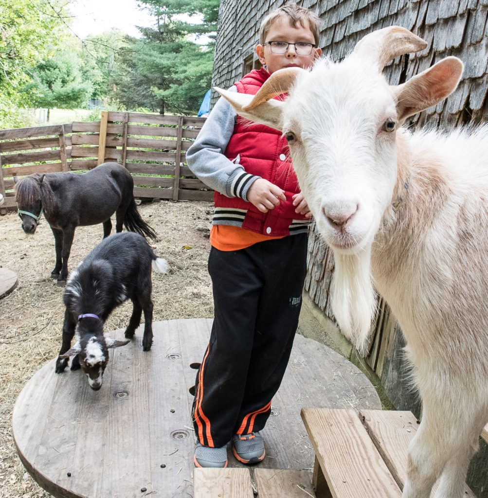 "Gabriel Munroe, 9, interacts with some of his five  goats in his backyard in Auburn. ""They play with you. You can snuggle them. They're fuzzy. And cute,"" he said. The pets came from Gabriel's allergist, who also happens to be a goat farmer."