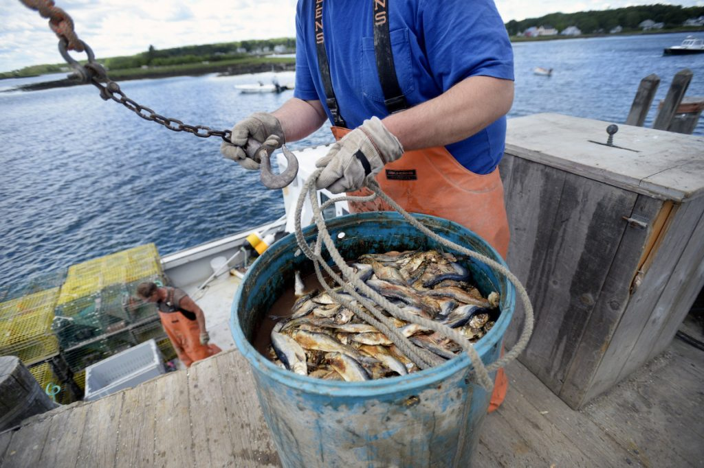 Mitch Nunan loads herring onto his lobster boat in 2017, when the herring quota was 110,000 metric tons. Regulators reduced that by half this year and are proposing to drop it to 14,558 metric tons in 2019.