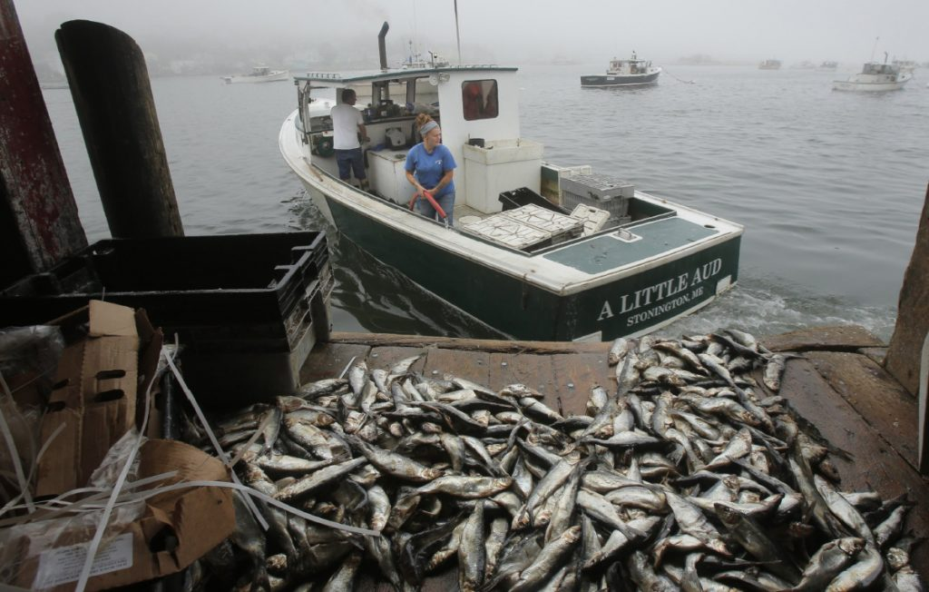 A New England panel recommends a yearly herring quota that would make 14,588 metric tons available for the U.S. commercial fishery.