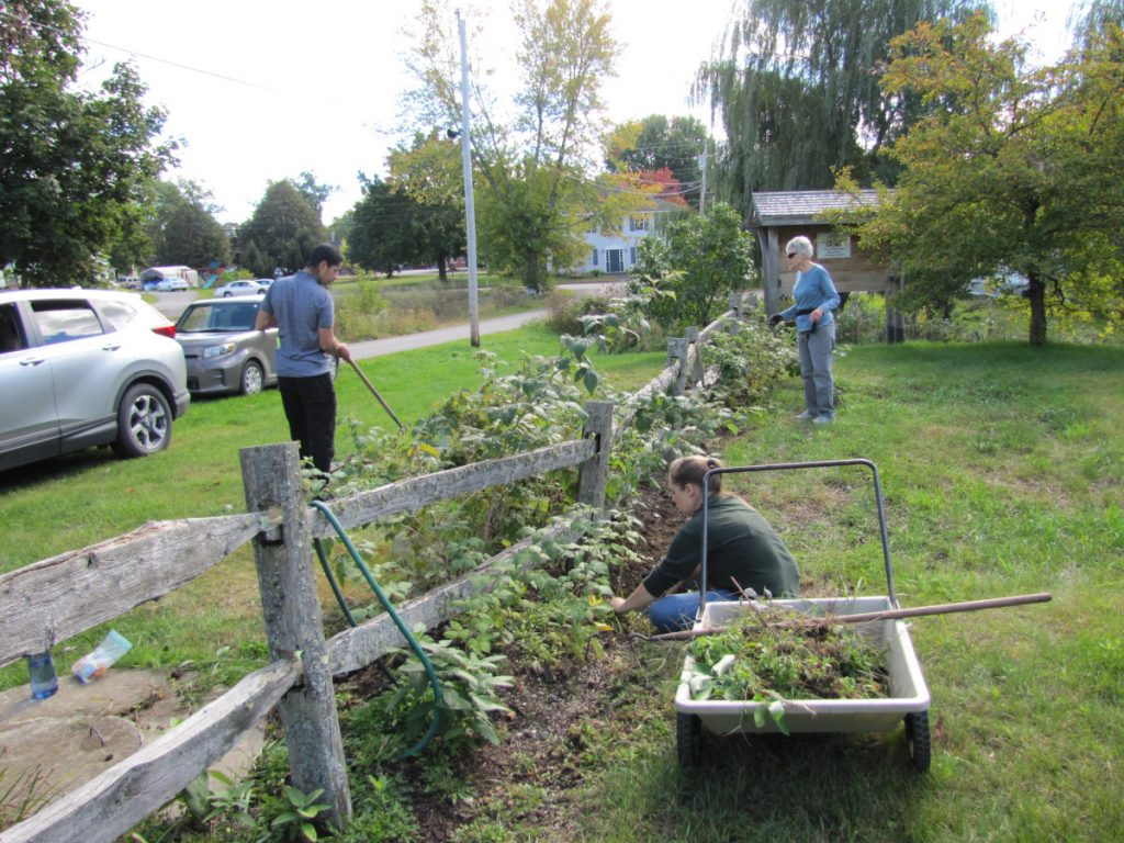 Christie Saunders, far right, UBR board member with Unity College students cleaning up the raspberry patch in Triplet Park.