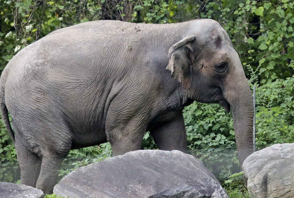 An animal welfare group has filed a petition against the Bronx Zoo on behalf of Happy. who was separated from the zoo's two other elephants.