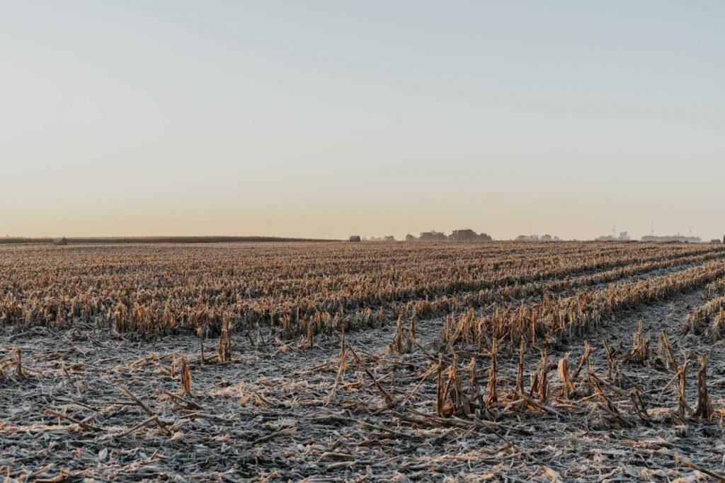 Frost covers the ground of a harvested corn field on a family farm in Iowa in  2016.