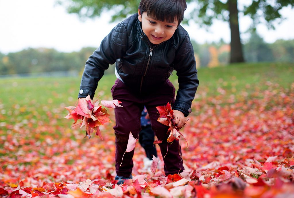 Aarav Jain, 3, of Scarborough, gathers fallen leaves under a maple tree at Springbrook Park in Scarborough on Monday. Tuesday's high winds took a toll on the region's trees – and power lines – and more high winds are forecast for Thursday.