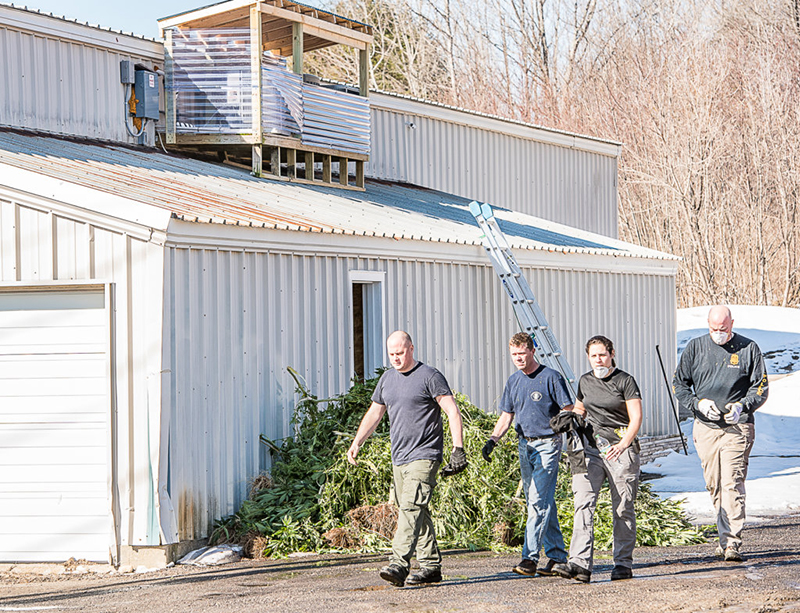 Federal drug agents confiscate marijuana plants in a warehouse behind a used car business on Lisbon Street in February during a raid that targeted 20 locations in Lewiston and Auburn.