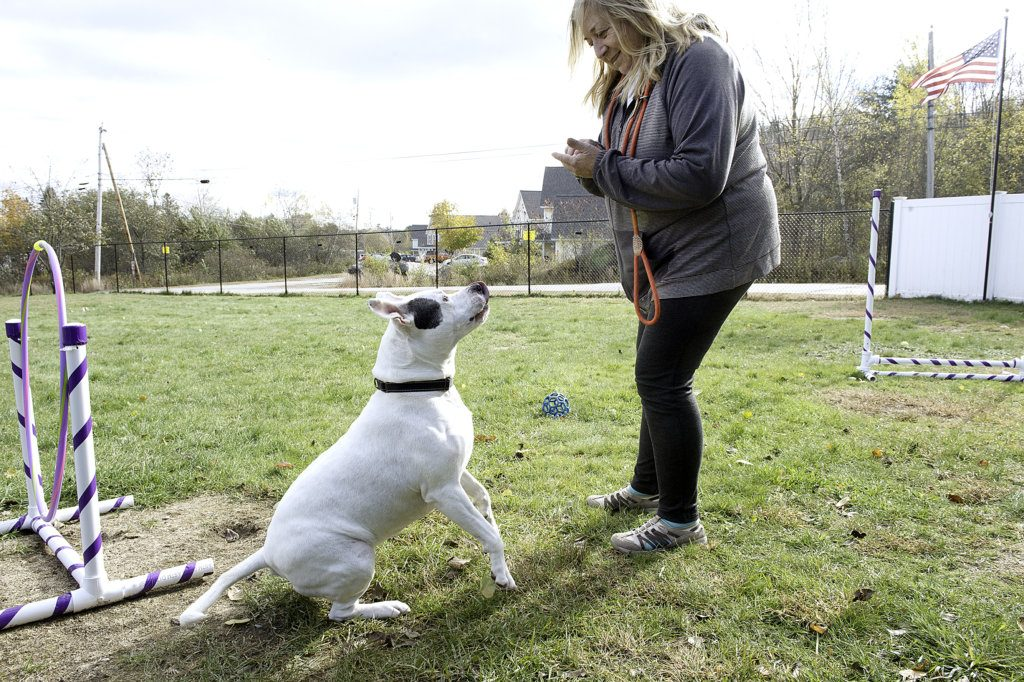Pat Ingersoll, canine director at the Responsible Pet Care Shelter in Paris, plays with Ginger, 7, on Thursday.
