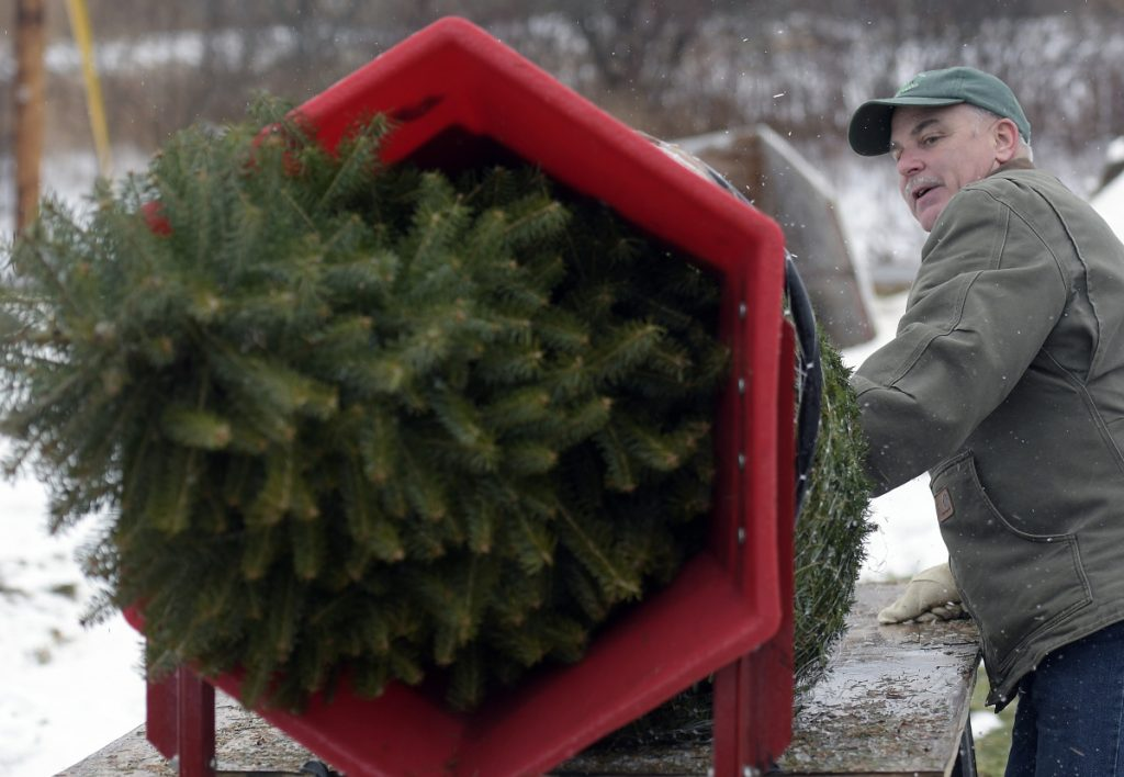 Robert W. Palmer III wraps a freshly cut fir tree Sunday at the business he operates with his wife, Donna L. Palmer, Ben and Molly's Christmas Tree Farm in China.