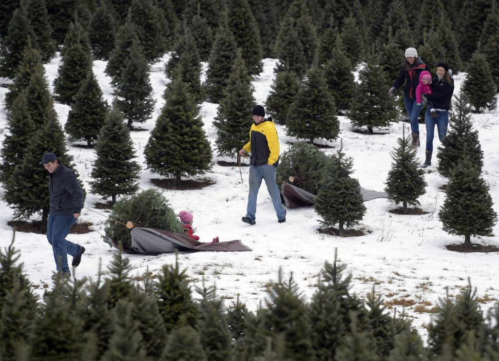 Cody Hickey, left, and his brother, Scott, tow trees they cut Sunday as Scott's girlfriend, Libby Williams, lugs a saw while Cody's girlfriend, Mikaela Sleeper, carries their daughter, Addison, 1, while her sister, Melanie, 3, gets a ride on the sled from Cody. The crew cut trees at Ben and Molly's Christmas Tree Farm in China.