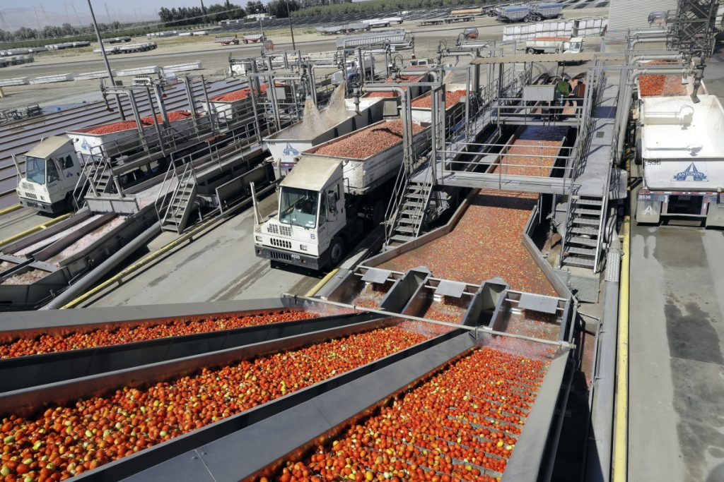 Tomatoes go through a washing process in Huron, Calif., in September.