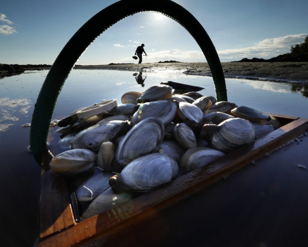 Mike Suprin of Rollinsford, N.H., in background, calls it a day after filling his basket with softshell clams at Cape Porpoise in Kennebunkport.