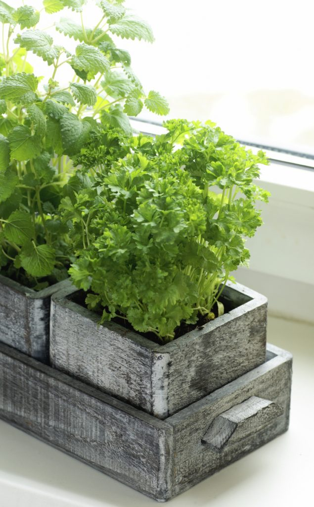 The temperature in most Maine homes in winter will be fine for growing herbs.