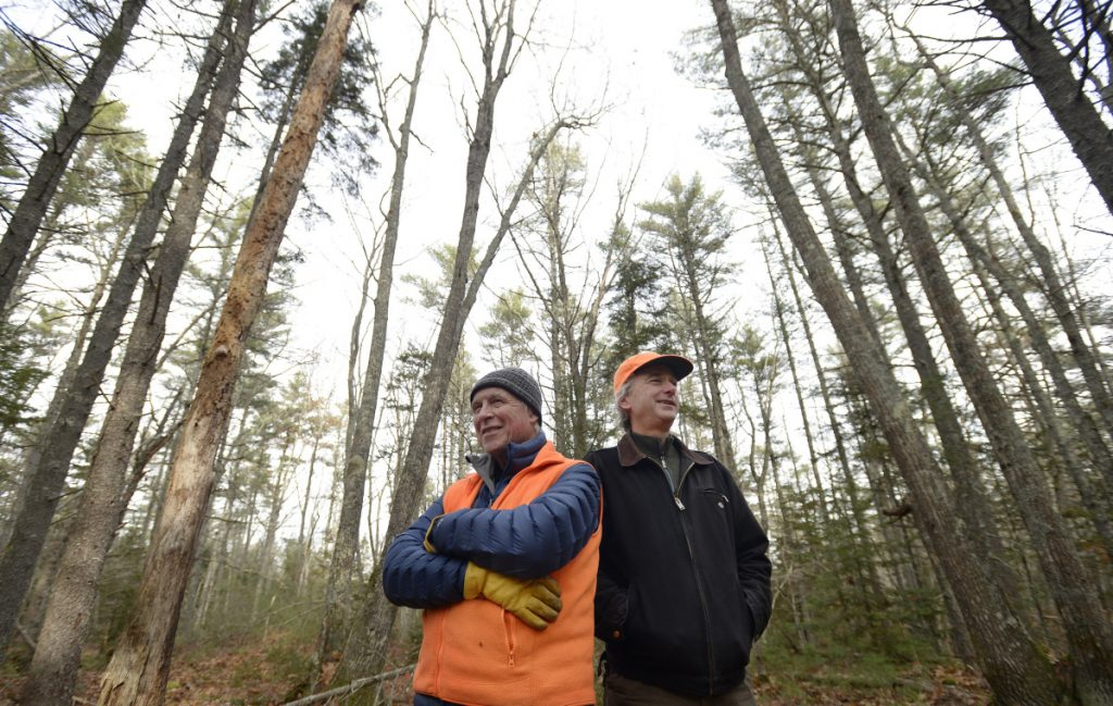 Biologist Jack Witham and data manager Clarke Cooper among the trees in the Holt Research Forest.