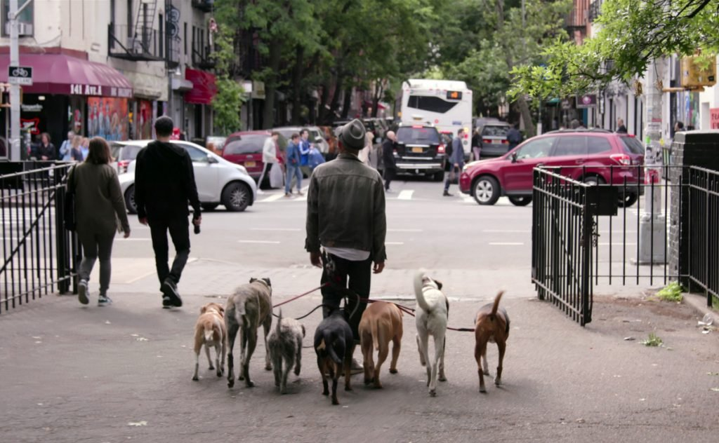 """This image released by Netflix shows a scene from the documentary """"Dogs."""""""