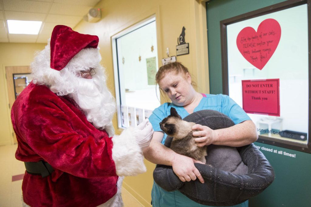 Melinda Dawes, a shelter worker, shares Felicity, one of the cats found recently in an a Unity storage unit, with Santa Claus as she prepares the cat for its new home Saturday at the Humane Society Waterville Area shelter in Waterville. The organization held an open house that day to raise money to keep the shelter open.