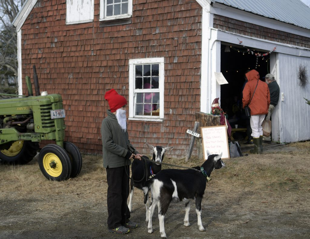 Keiran Payson-Roopchand, dressed as Tomten, accompanies the yule goats Sunday during a Scandinavian Christmas celebration at his family's farm in Somerville. Pumpkin Vine Family Farm hosted the event that featured Tomten, a farm gnome.