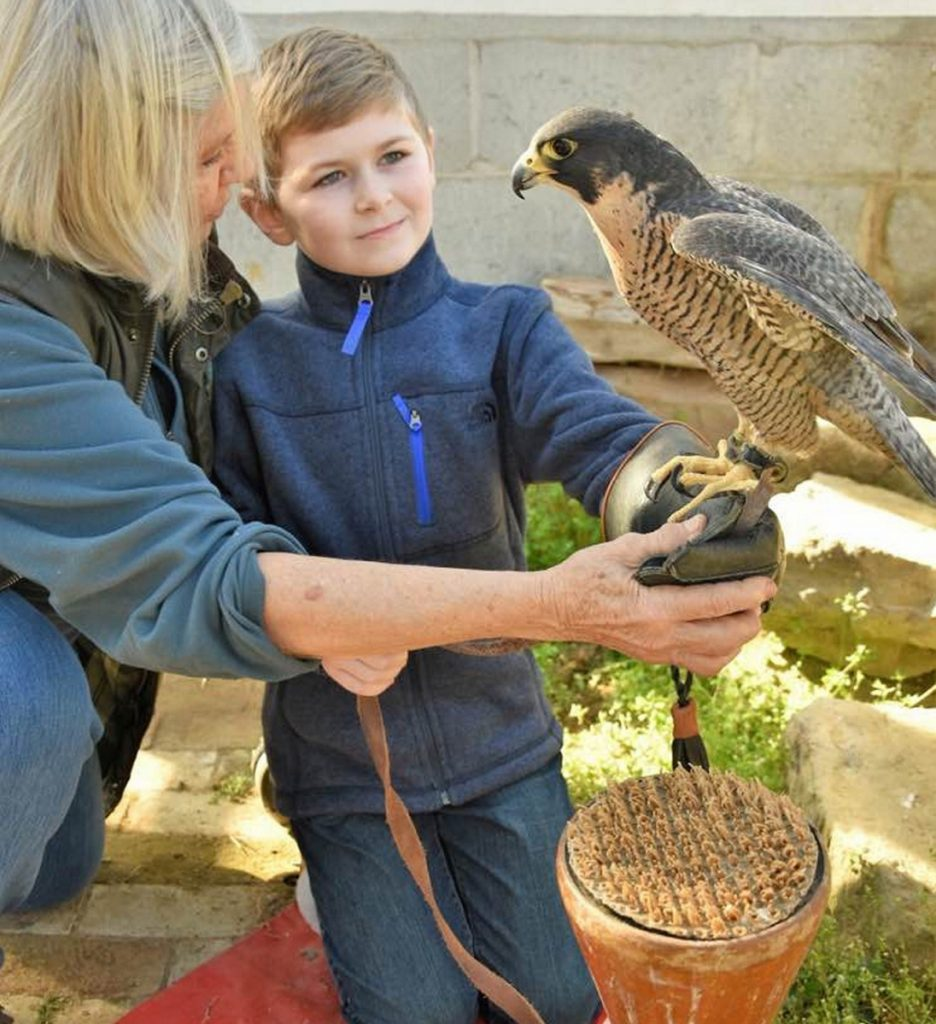 Nancy Cowan, left, shows Brendan Pritchard of Wakefield, Massachusetts, how to hold a peregrine falcon on a falconry glove at the New England School of Falconry in Deering, N.H., which Cowan runs. Pritchard's favorite animal is the peregrine falcon and his parents brought him for his ninth birthday.