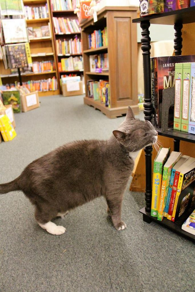 """Sergei, a staple at Bridgton Books, was known for seeking attention from customers. """"He just had a sweet disposition ... very loving,"""" Pam Ward said."""