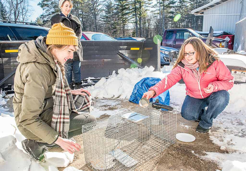 Kaili Stalling, left, and Rachel Bray set a humane trap for the remaining stray cats at the Mid-Maine Waste Action Corp. transfer station in Auburn. Laura Hobbs, in back, is a regular foster home provider for cats captured by Community Cat Advocates and does much of the transporting.