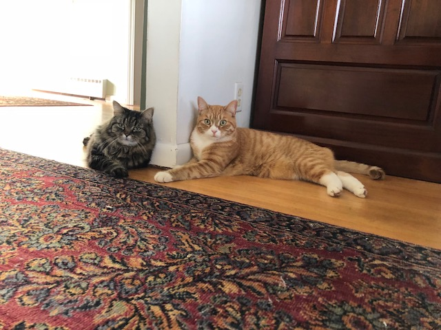 Amy Calder's cats, Bitsy and Thurston, lounging.