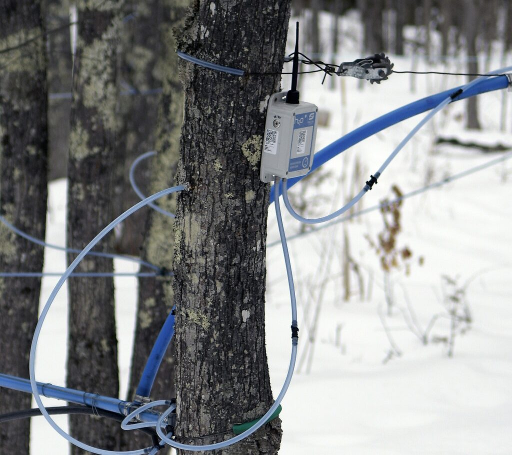 A monitor sends electronic signals to the sugar shack about the flow of sap in a sugar bush Sunday at Bacon Farm Maple Products in Sidney.
