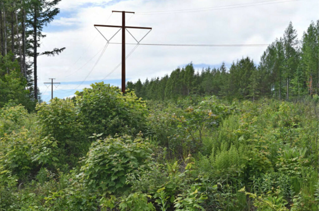 This simulated photo from Central Maine Power Co. shows a section of the proposed transmission corridor looking northwest from Wilson Hill Road in West Forks.