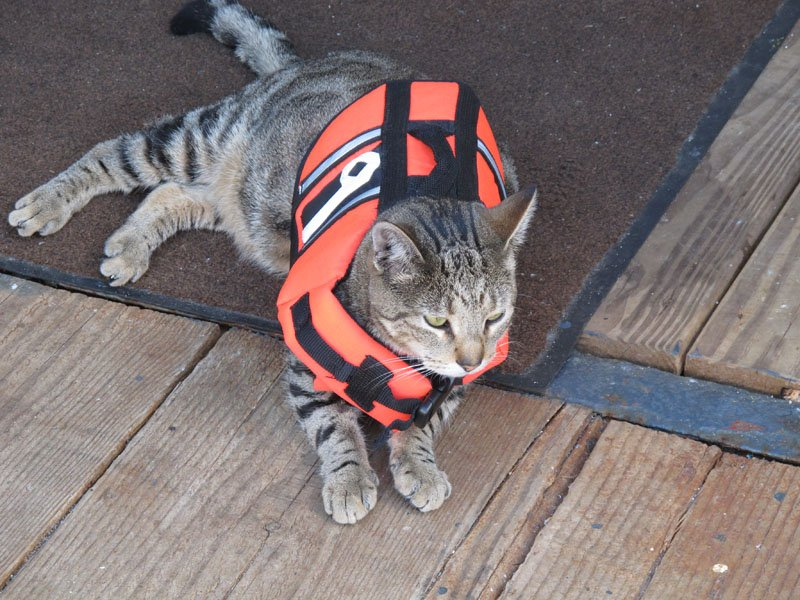 Nine, the Sea Hunter's mascot, models his life jacket Saturday. Normally, he roams the ship without it.